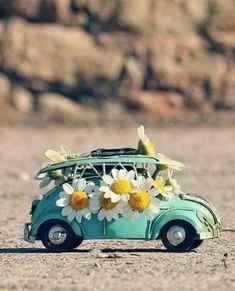 Comprar Flores Online, Ramos de Flores para Cáceres, Flores para Regalar, Flores para Cáceres, Envíos Florales Urgentes a Cáceres, Floristería en Cáceres