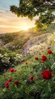 Corona Funeraria Selecta, Corona de Flores para Difuntos, Flores para Defunción, Envíos Florales al Tanatorio, Arreglos Florales Fúnebres