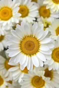 Palma Funeraria Pureza, Flores Fúnebres, Centros de Flores para el Tanatorio, Centro de Flores para Dar Condolencias, Comprar Flores Online