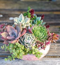 Cesta Plantas Canadá, Cesta de Plantas para Nacimiento, Cesta de Plantas para Cumpleaños, Arte Floral, Cestasde Plantas de Regalo