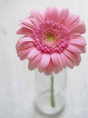enviar flores para cumpleaños, regalar cestas de flores a domicilio, Arte Floral, cestas de flores para nacimiento, cestas de flores para el día de la madre, cestas de flores para cumpleaños, cestas de flores a domicilio a buen precio