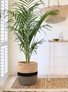 Cesta Plantas Panamá, Floristería Online, Cesta de Plantas para Nacimiento, Cesta de Plantas para Cumpleaños, Flores a Domicilio
