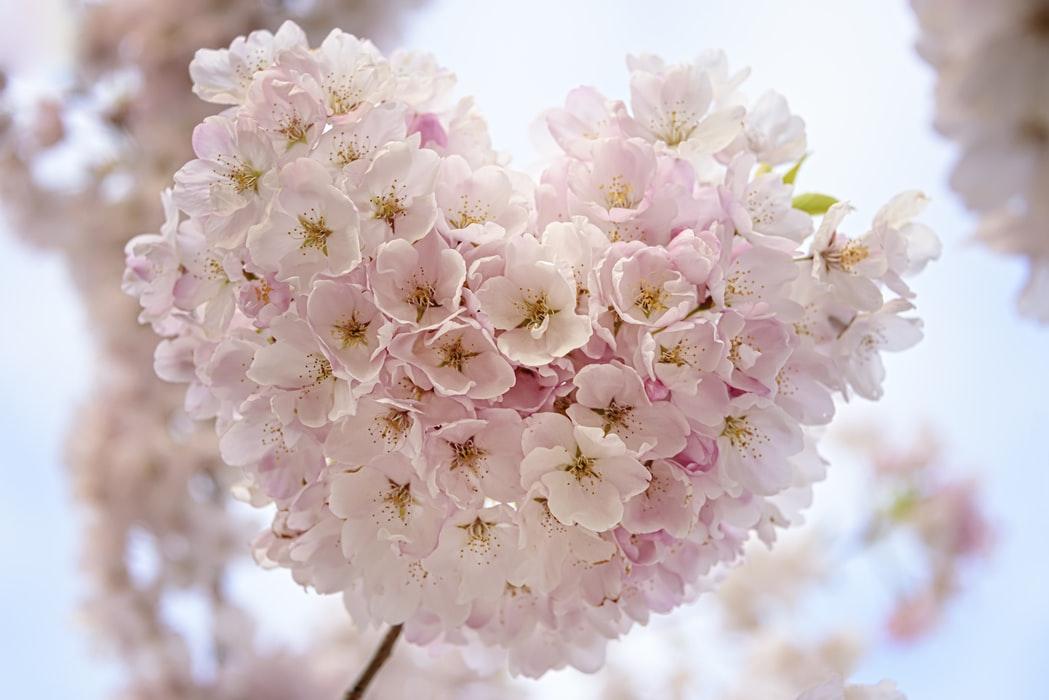 Flores para Tanatorio, enviar coronas de rosas blancas tanatorio, flores de funeral, corona rosas rojas tanatorio, corazon de rosas rojas
