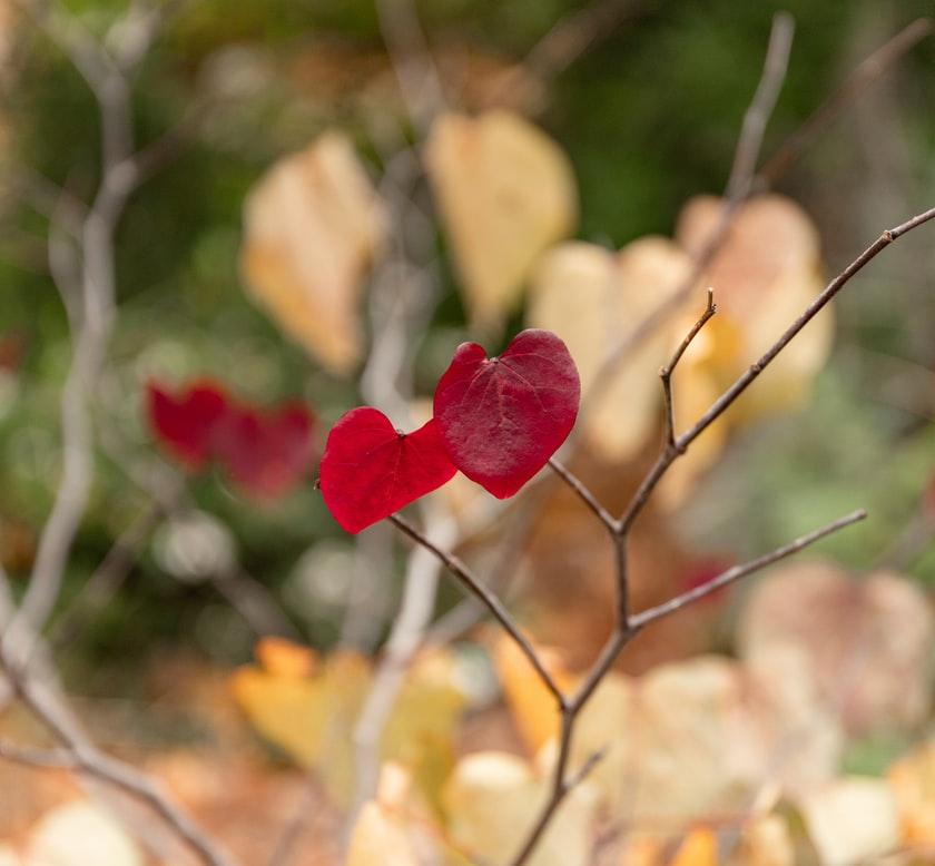 Floristería online, enviar orquideas, enviar plantas, plantas a domicilio, regalar plantas, orquídea, enviar plantas a domicilio, envío de plantas, regalar orquideas, plantas regalo